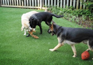 Eliminates urine kill spots, pests and holes in the grass