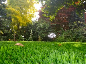 Looks like grass - feels like grass!