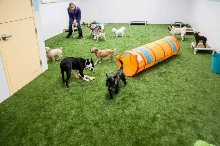SYNLawn works indoors for your pet as well