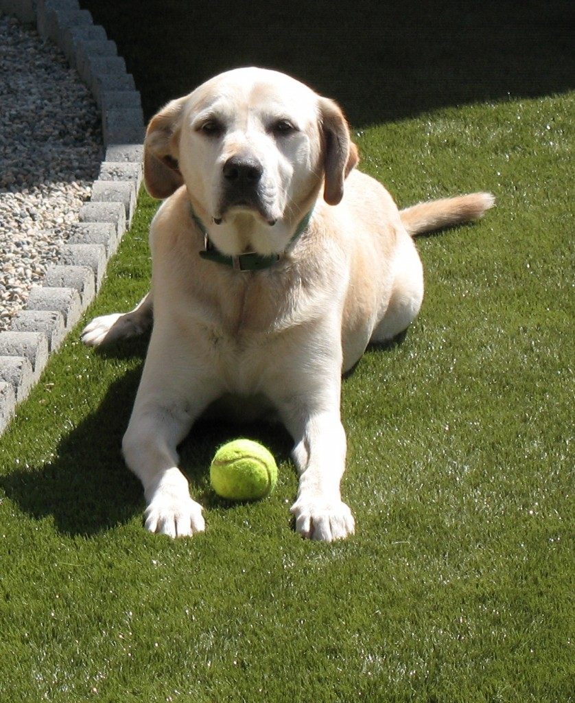 Keep your pets happy and healthy with SYNLawn