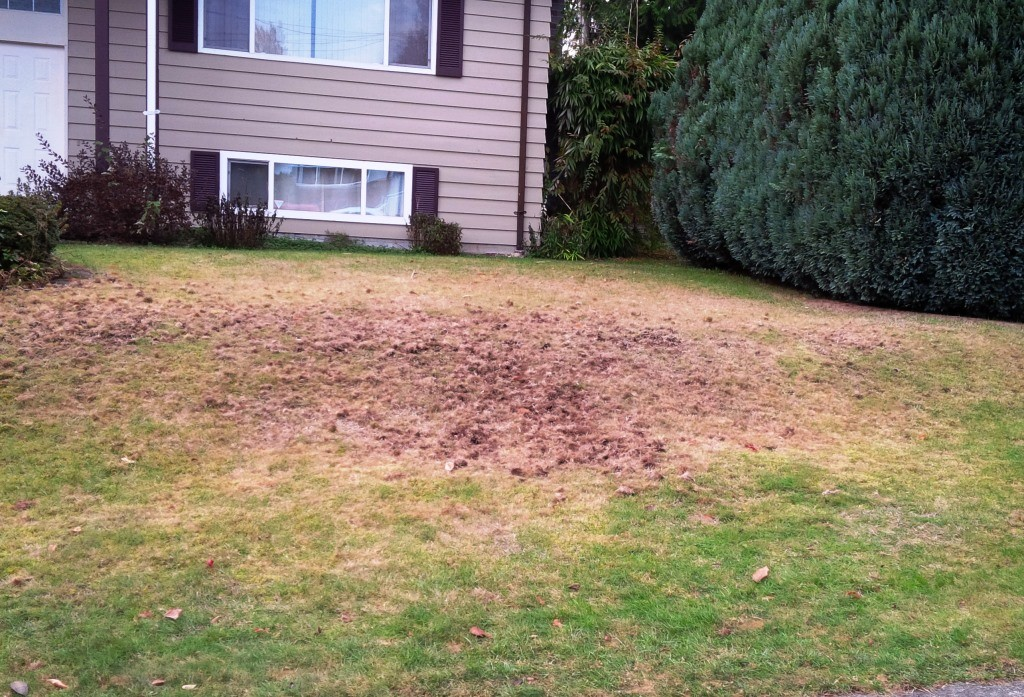 This is what chafer beetle destruction looks like.