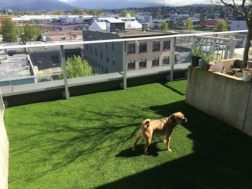 A Vancouver deck that's pet friendly with a view.