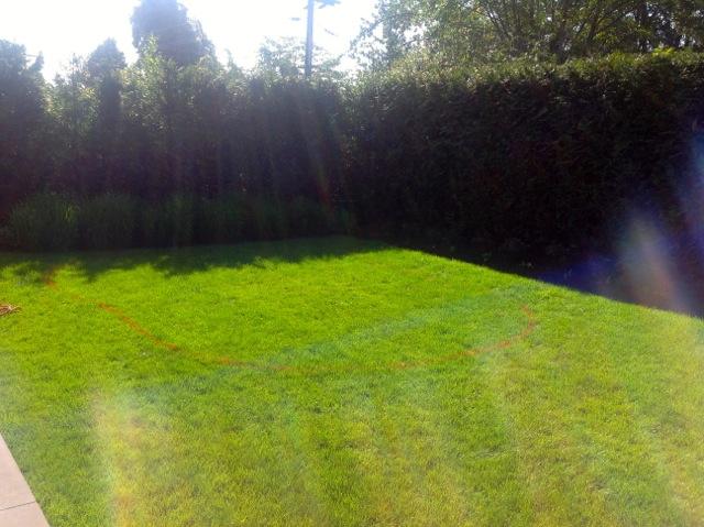 The yard before we began work.