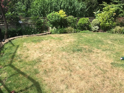 Vancouver yard with dead grass. With water restrictions this is becoming a more common site throughout all areas.