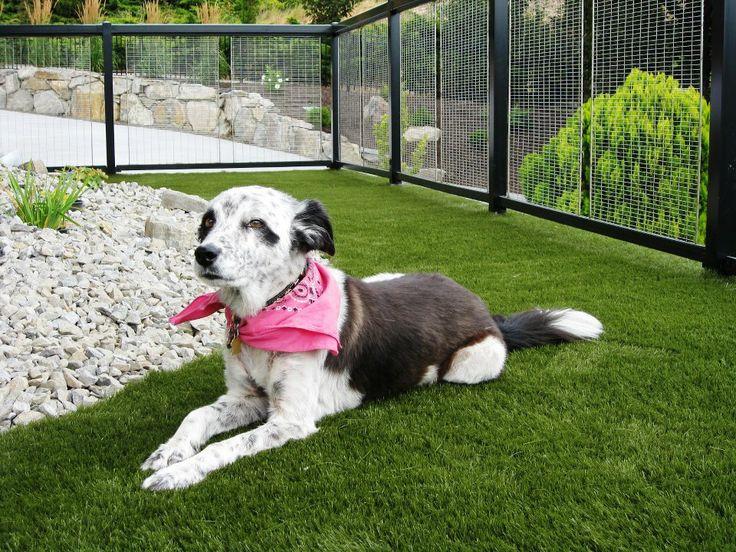 SYNLawn® dog lawn