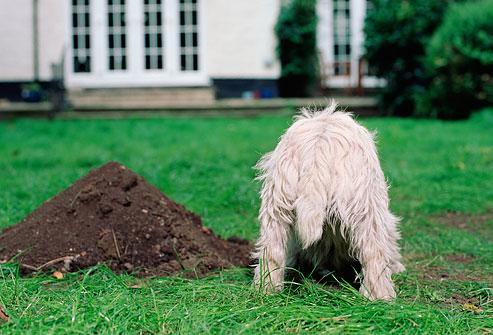digging-yard